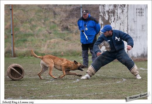 1352-24 mars 2013- Dakota du banc des hermelles