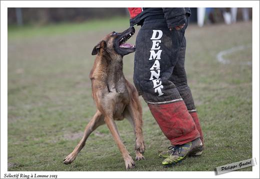 564-24 mars 2013 - Dickson des loups de genain