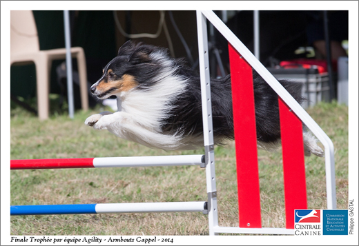 CANI BALLES - DEUSTY -0005-09 août 2014