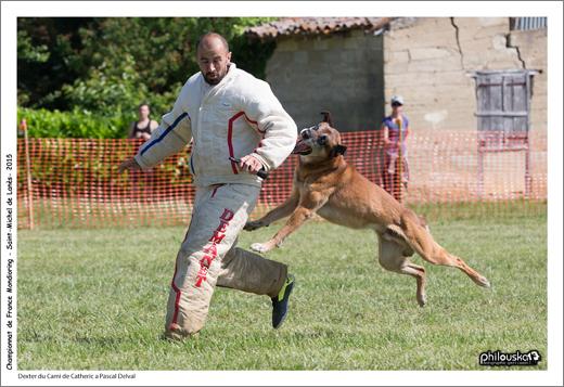 2174-31 mai 2015 - Dexter du Cami de Catheric à Pascal Delval