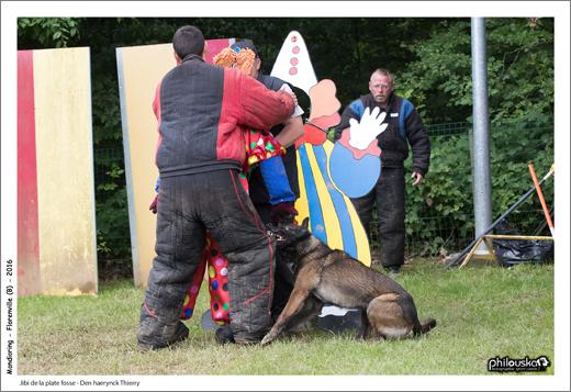 0100-12 juin 2016 - Jibi de la plate fosse - Den haerynck Thierry