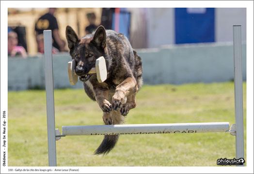 330 - Gallys de la cité des loups gris - Anne Lesur (France) - 0012-13 août 2016